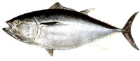 Tuna Species (amended & expanded)