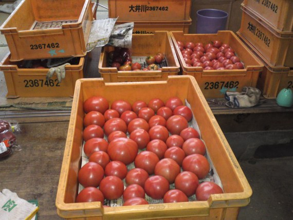 Tomatoes & Kabocha in Yaizu City: Ooba Garden