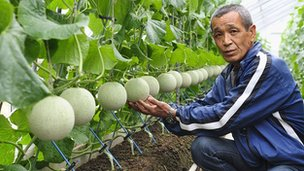 Shizuoka Musk Melons-Japan's obsession with perfect fruit by Roland Buerk of the BBC