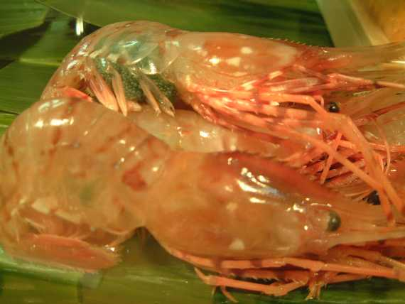 Japanese Crustacean Species 2: Large Sweet Prawn-Botan Ebi-牡丹海老