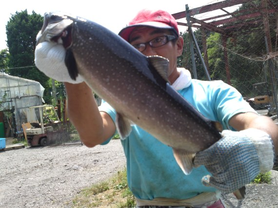 Rainbow Trout, Iwana Trout & Sakura Trout at Kakishima Trout Farm in Fujinomiya City!