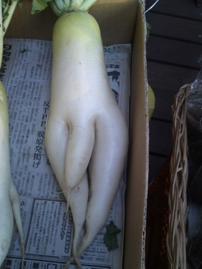 Indecent (Well-Hung?) Daikon!