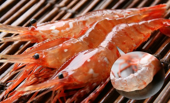 Japanese Crustacean Species 2: Botan Ebi-Large Prawn
