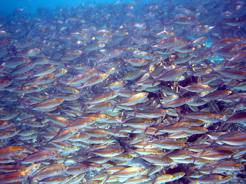 Japanese fishes